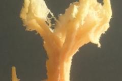 Els_van_der_Meulen_fruit_organic